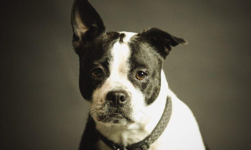 Електронен нашийник за куче